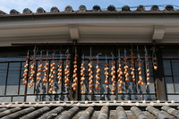 Dried persimmon eaves Stock photo [696518] Persimmon