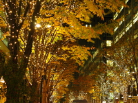 I look up at the trees light up Stock photo [697157] Business