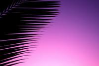 Leaves of palm silhouette Stock photo [697218] Hawaiian