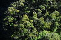Laurel forest of Aya Stock photo [697928] Laurel
