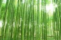 Sagano of bamboo forest Stock photo [698392] Bamboo