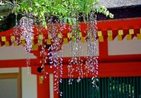 Kasuga Stock photo [699545] Kasuga
