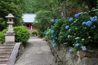 Yatadera of Yamatokoriyama and hydrangea Stock photo [773642] Yamatokoriyama