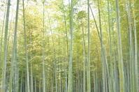 Bamboo forest at Asuka Stock photo [777307] Bamboo