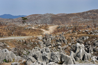 Karst plateau you have finished the open burning Stock photo [777363] Akiyoshi