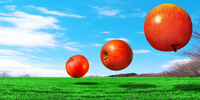 Three apple synthesis that floats on grassland Stock photo [780131] Apple