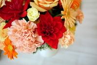 Red dahlia and orange flowers Stock photo [781865] Dahlia