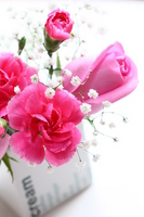 Roses and carnations Stock photo [781980] Carnation