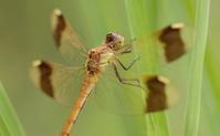 Dragonfly Stock photo [782608] Miyamaakane