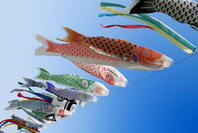 Carp streamer carp streamer Stock photo [861552] Carp