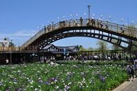 Maekawa Iris Garden Stock photo [865094] Itako