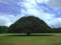 Tree of this tree that do Stock photo [866401] Monkey