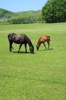 Grazing horse Stock photo [867502] Horse