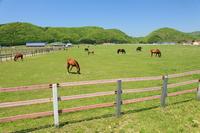 Hidaka of horse ranch Stock photo [868614] Horse