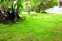 Moss carpet Stock photo [870046] MOSS.