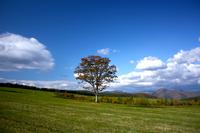 Big tree of prairie Stock photo [936869] Ohki