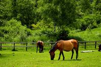 Kiso horses Stock photo [937616] Ranch