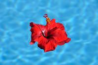 Hibiscus Resort image Stock photo [938357] Resort