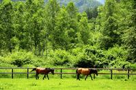 Ranch of Kiso horses Stock photo [940052] Kiso
