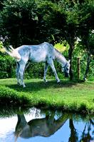 Shady white horse Stock photo [940433] Horse