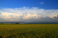 Evening of rice field and clouds Stock photo [942061] Yamagata