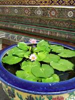 Water lily of Bangkok Stock photo [942339] Bangkok