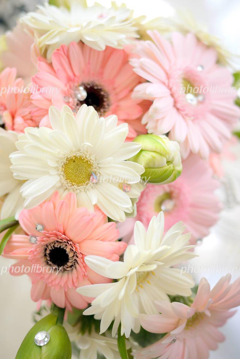 白とピンクのガーベラたち