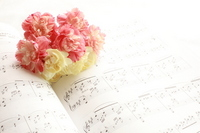 Carnation and music Stock photo [1042948] Carnation