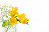 Freesia Stock photo [1052366] Freesia
