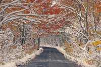 Road surrounded by autumn leaves and snow Stock photo [1054663] Road