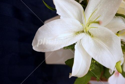 紺に映えるカサブランカ-写真素材 紺に映えるカサブランカ 画像ID 1160182  紺に映える