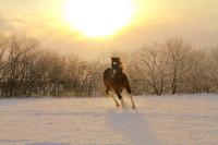 Ranch horse Stock photo [1151467] Morning