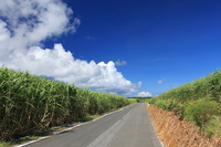 Kikai Island sugarcane fields and farm roads Stock photo [1153075] Kyushu