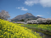 Yufuin of spring Yufu and rape and cherry Stock photo [1157499] Yufuin