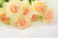 Wedding Bouquet Stock photo [1249436] Wedding