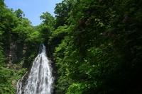 Black bear Falls: Shirakami Stock photo [1253465] Waterfall
