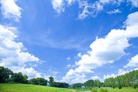 Poplar tree-lined and blue sky Stock photo [1253470] Poplar