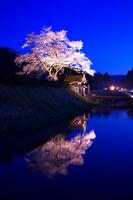 One cherry Asakura ruins Stock photo [1254599] Cherry
