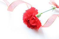 Red carnation and ribbon Stock photo [1255510] Carnation
