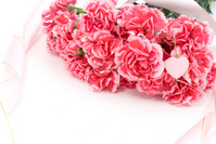 Pink carnation bouquet Stock photo [1260775] Carnation