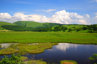 Summer of Yashima wetlands Stock photo [1345805] Yashima