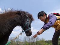 The Feeding Stock photo [1350778] Horse
