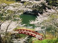 Sakurabuchi park Kagetsu Bridge Stock photo [1352095] Cherry