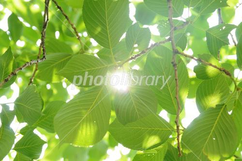 �Ф���ϳ����-stock photo