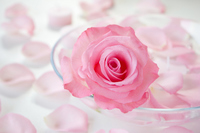 Rose and aromatherapy candles Stock photo [1435282] Rose