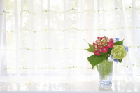 Hydrangea Stock photo [1438065] Window