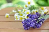 Lavender and chamomile Stock photo [1441883] Lavender