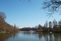 冬の井の頭公園