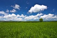 Large trees and prairie of Hokkaido Stock photo [1444603] Prairie