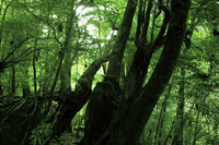 Yakushima, forest of Princess Mononoke Stock photo [1445173] Kagoshima